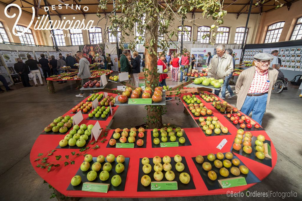 Festival de la Manzana de Villaviciosa 2