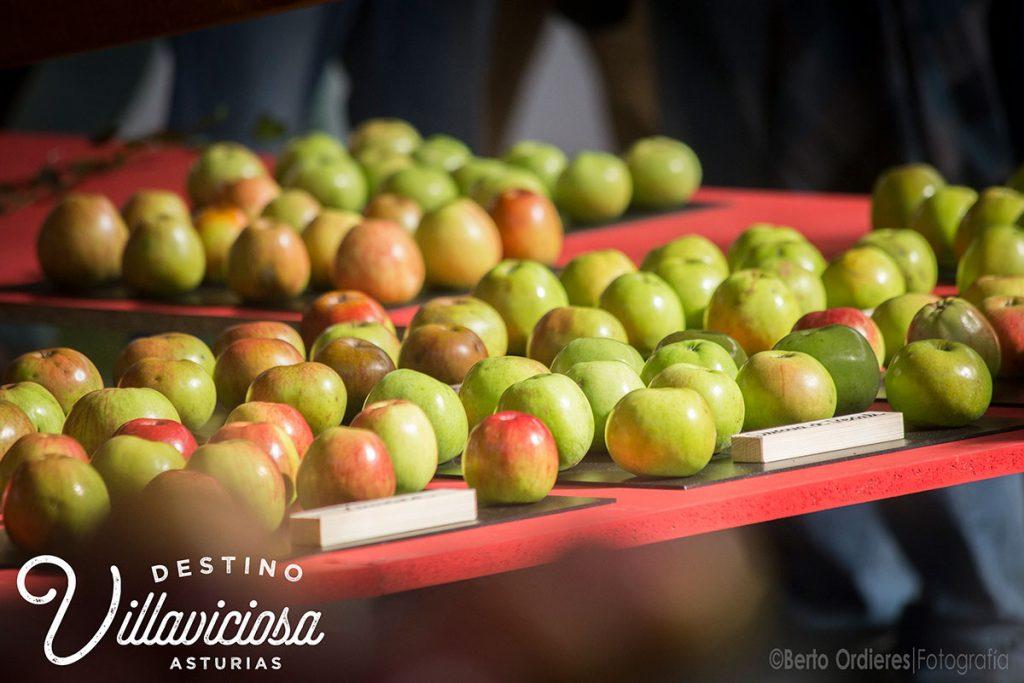 Festival de la Manzana de Villaviciosa 6