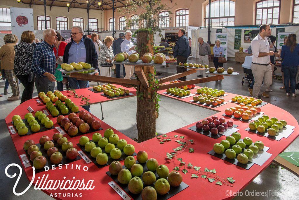 Festival de la Manzana de Villaviciosa 10